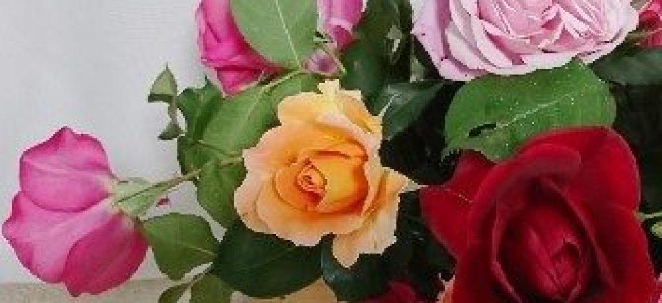 ご近所さんのバラ